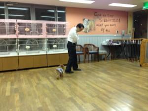 夕食前に愛犬サロンでゲーム大会、準備中です。