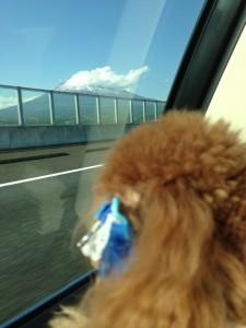 車窓から富士山が見えてきました。アリスは初めて見る富士山です。